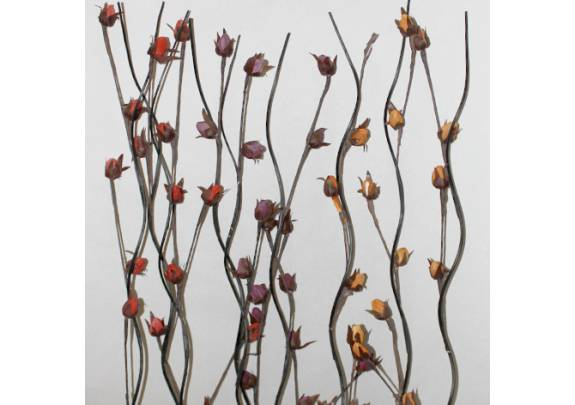 Цветок 0568-17  сухоцвет/150см