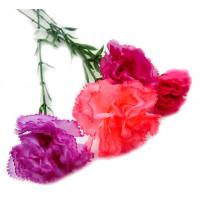 Цветок Z006-2